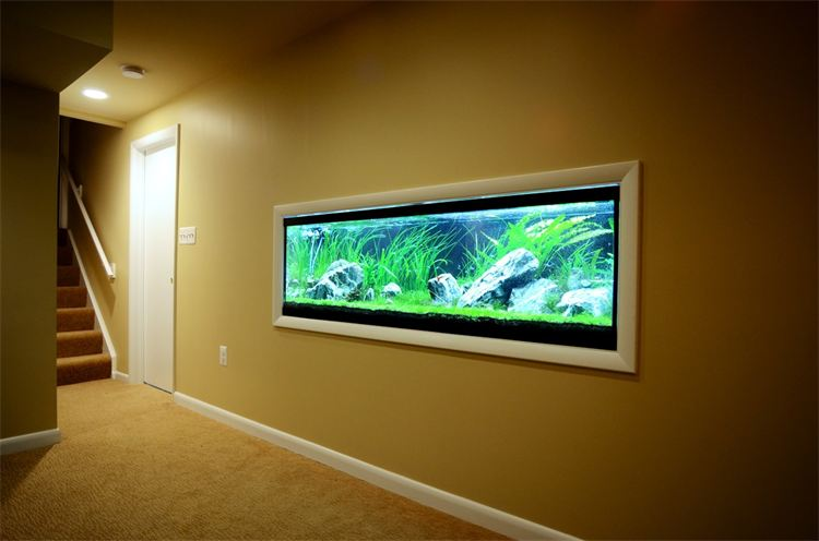 B Chic Interiors 187 In Wall Fish Tank In Columbia